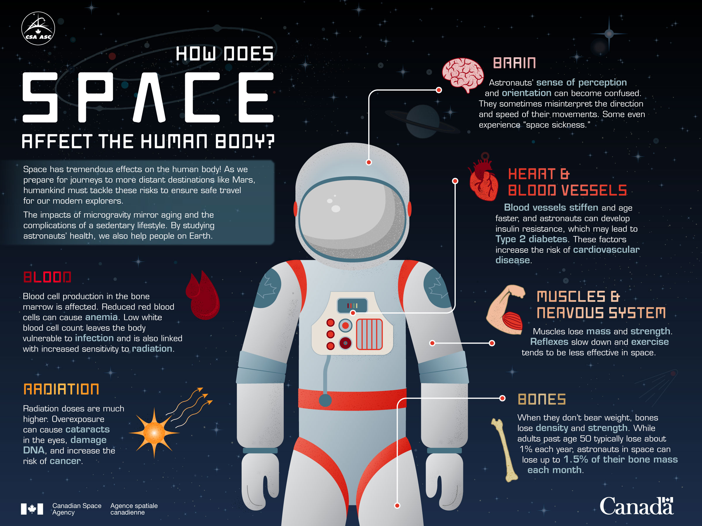 Space has tremendous effects on the human body! As we prepare for journeys to more distant destinations like Mars, humankind must tackle these risks to ensure safe travel for our modern explorers. The impacts of microgravity mirror aging and the complications of a sedentary lifestyle. By studying astronauts' health, we also help people on Earth. (Credit: Canadian Space Agency)